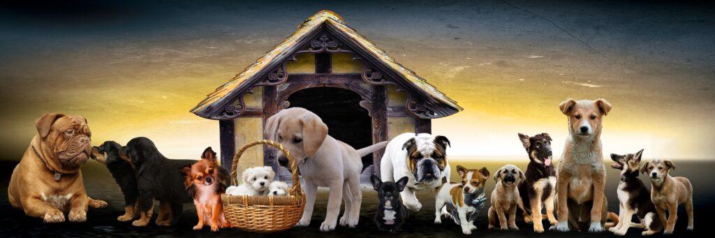 Forskellige hunde