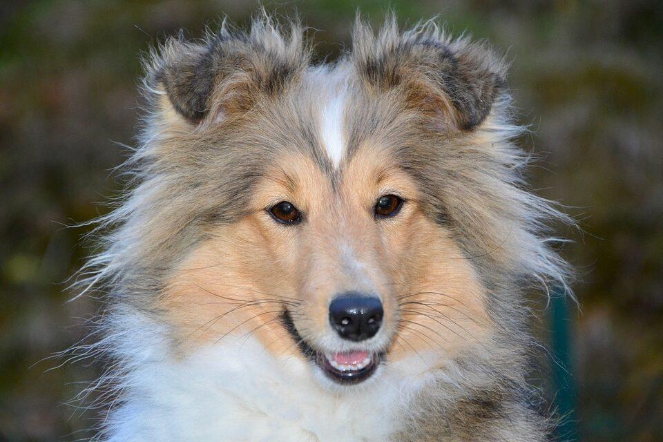 Hundelegetøjet, der ikke kan bides i stykker
