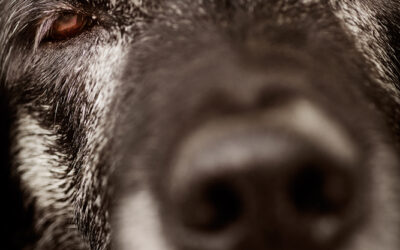 Verdens ældste hund