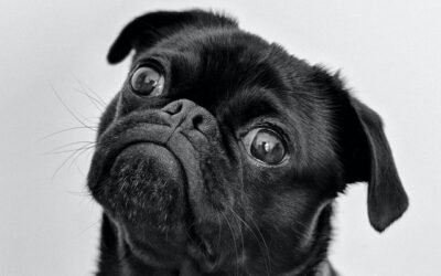 Verdens grimmeste hund