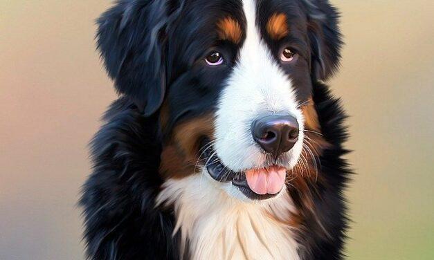 Dachshund Magnetic Dog – den perfekte gave til hundeejeren
