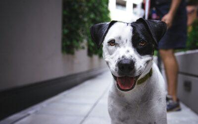 Hvad er hundetræning? Hvordan foregår det?