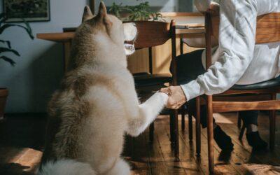 Sådan indretter du et hundevenligt hjem